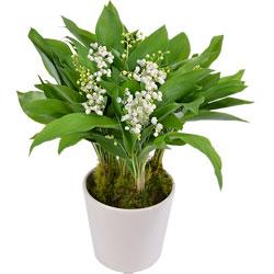 Livraison de fleurs envoyez un superbe bouquet d s 22 for Muguet livraison domicile