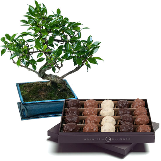 Doos rochers en bonsai