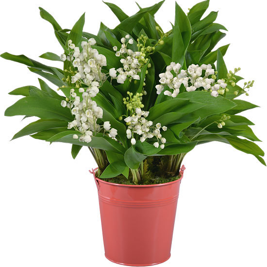 Lily-of-the-Valley in a Coral Vase