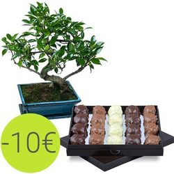Box of chocolate rochers and bonzai