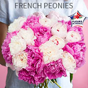 French peonies - it's the season!