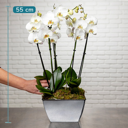 So Chic Luxurious white orchids