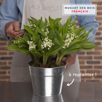 90 stems of Lily-of-the-valley