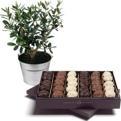 Box of chocolate rochers plus an olive-tree