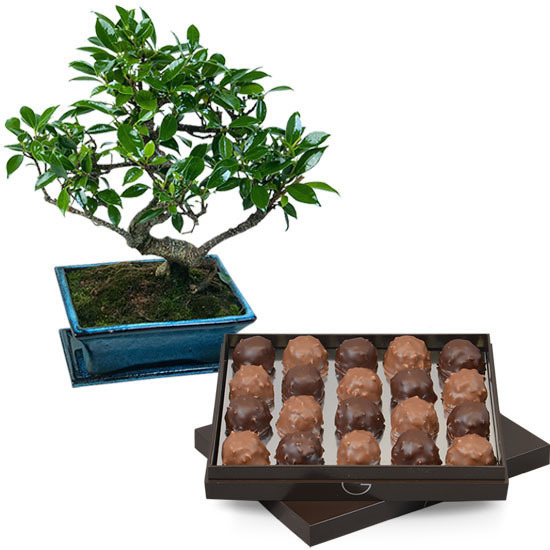 Box of Rochers and Bonsai