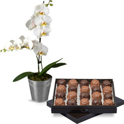 Delicious rochers and a white orchid