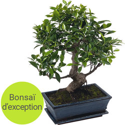 Exceptional Bonsai