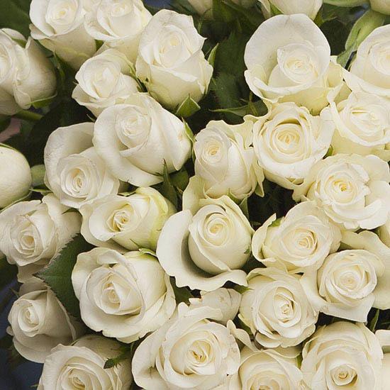 Amante Bouquet de roses Blanches - Livraison de roses | Aquarelle #SZ_13
