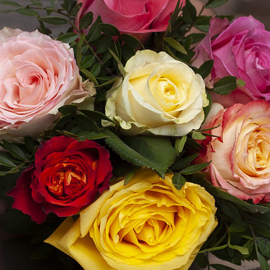 bouquet de roses d quateur livraison de roses aquarelle. Black Bedroom Furniture Sets. Home Design Ideas
