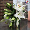 Perfumed white lilies