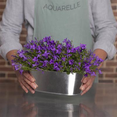 livraison fleurs 100 conforme au bouquet command aquarelle. Black Bedroom Furniture Sets. Home Design Ideas