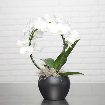 White Orchid Cascade