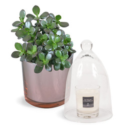 Succulent Plant and Scented Candle