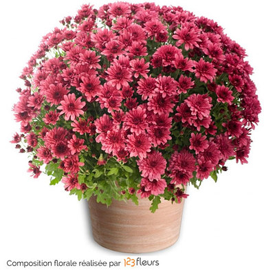 All Saints' Day flowers mauve pomponette chrysanthemums