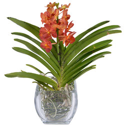 Vanda orchid and vase