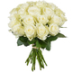 Magnificent Alpe d'Huez white roses