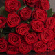 Magnificent Red Roses