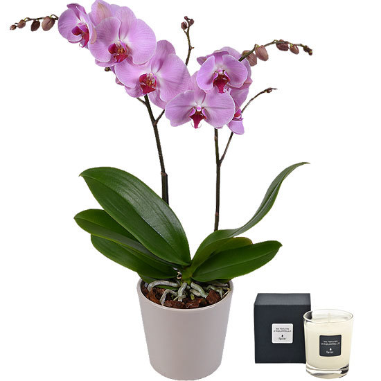 Butterfly Orchid and scented candle