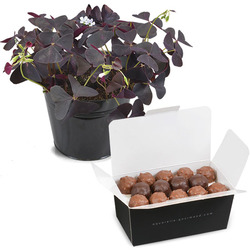 Oxalis and Chocolate Rochers