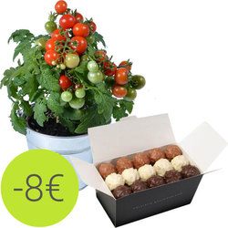 Cherry tomato plant and chocolate rochers
