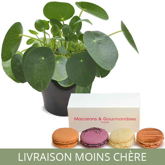 Pilea and Macaroons