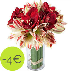 Home flower delivery Amaryllis