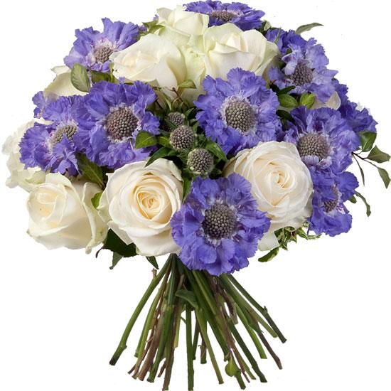 Infiniment bleu livraison de fleurs for Aquarelle fleurs livraison gratuite