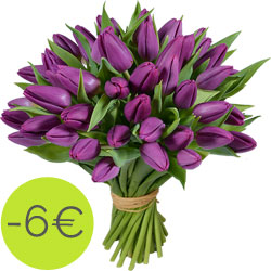 Tulipes 'Purple Prince'