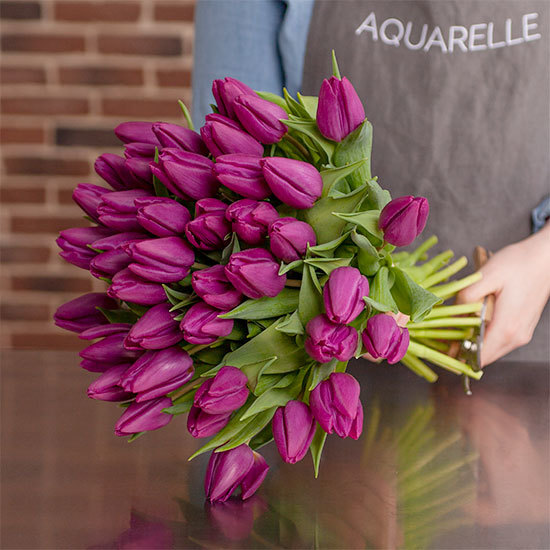 Tulipes Purple Prince