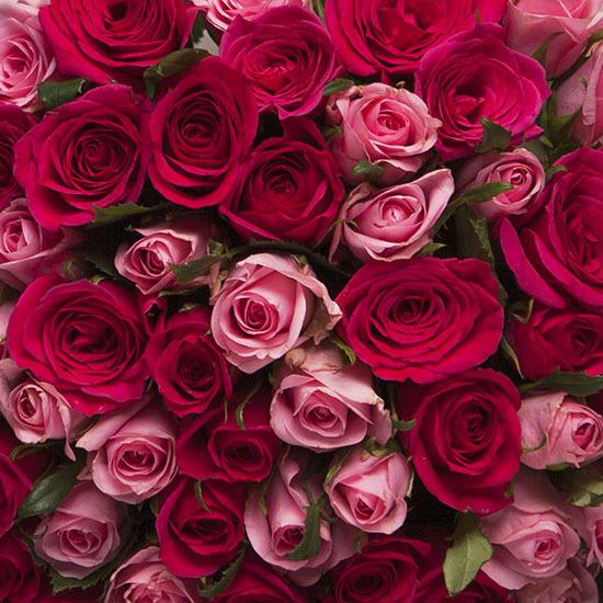 Ramo De Rosas Rosas A Domicilio Aquarelle