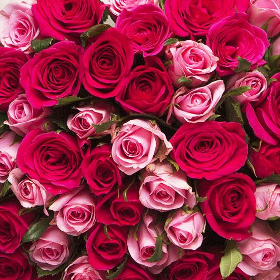 bouquet de roses tendresse aquarelle. Black Bedroom Furniture Sets. Home Design Ideas
