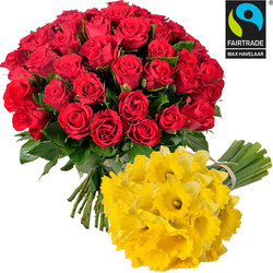 Bouquet de roses rouges + 30 jonquilles