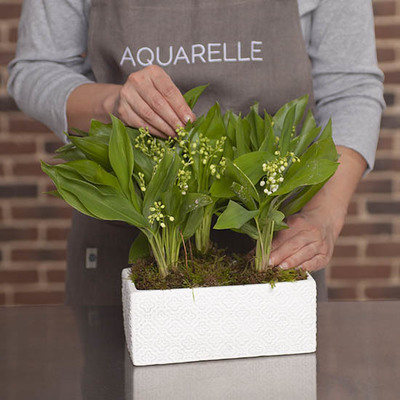 Lily-of-the-valley Planter