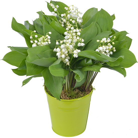 Woodland Lily-of-the-Valley in a Green Vase