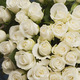 Pure White Rose bouquet