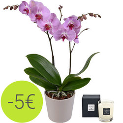 Pink orchid and scented candle
