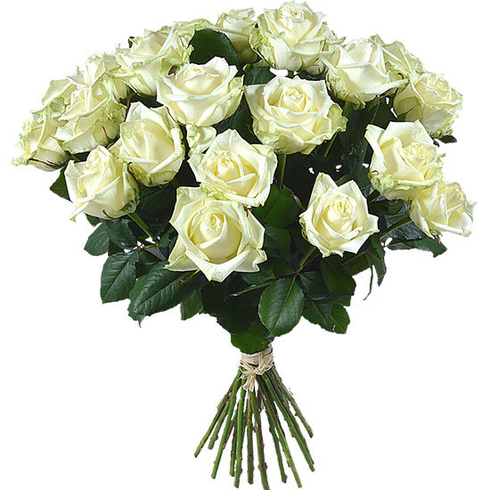 Bouquet of long stemmed white roses aquarelle for Bouquet de roses blanches