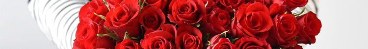 Our red roses