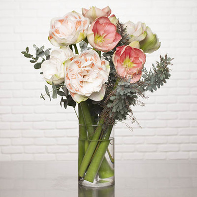 Dreamy Amaryllis Bouquet