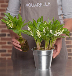 Woodland Lily-of-the-Valley in a Zinc Vase