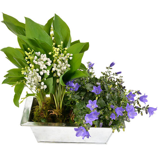 Lily-of-the-valley and campanulas