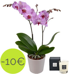 Pink butterfly orchid and fig tree scented candle