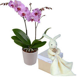 Send a Phalaenopsis orchid and cuddly rabbit