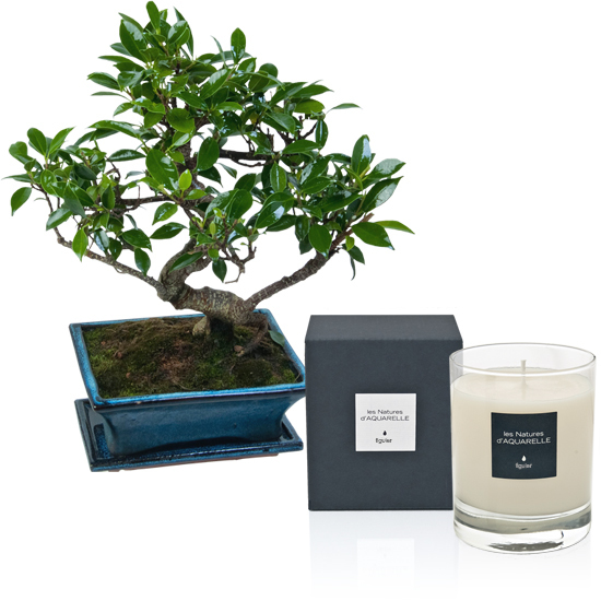 Bonsai and 190g scented candle