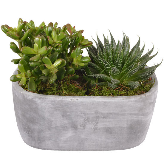 Planter of succulents
