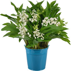 Lily-of-the-Valley and Blue Vase