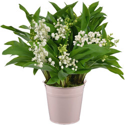 Lily-of-the-Valley in a Pastel Vase