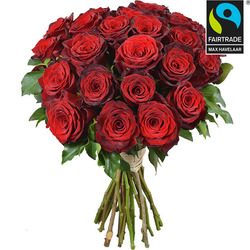 Large headed Monte Carlo Red Roses