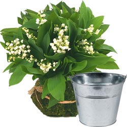 Lily-of-the-Valley and Zinc Vase
