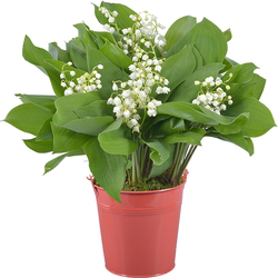 Woodland Lily-of-the-Valley in a Coral Vase